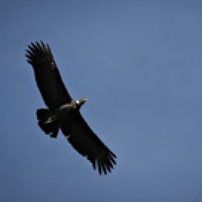 Observation des condors à Croix des Condors