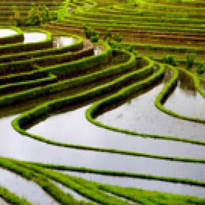 Ecotrek dans les rizières