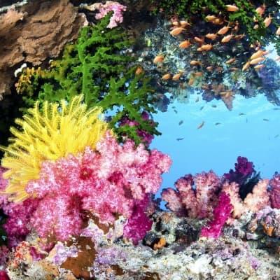 Découverte du Jardin de Corail à la Passe Nord