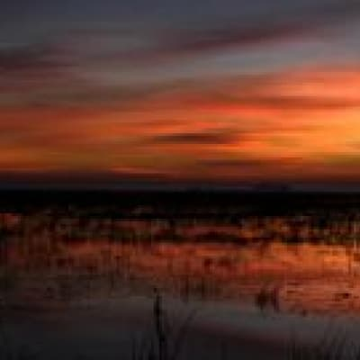 Expédition dans le Bayou et les marécages