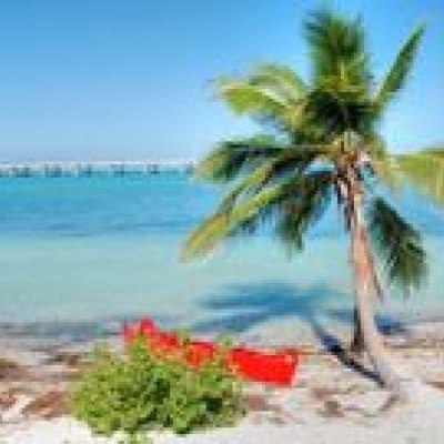 Découverte d'un coin de paradis : Key West