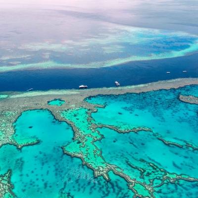 Croisière snorkeling sur la Grande Barrière de Corail
