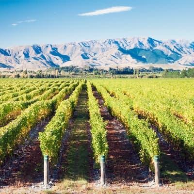 La route des vins du Marlborough