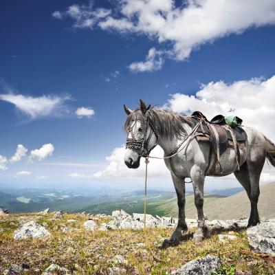 Balade à cheval au Sylvan Dale Guest Ranch (1h)