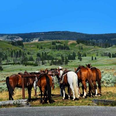 Balade à cheval dans Yellowstone