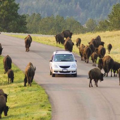 Safari en Jeep à Custer