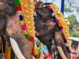 la Marche des Éléphants: voyage Kerala