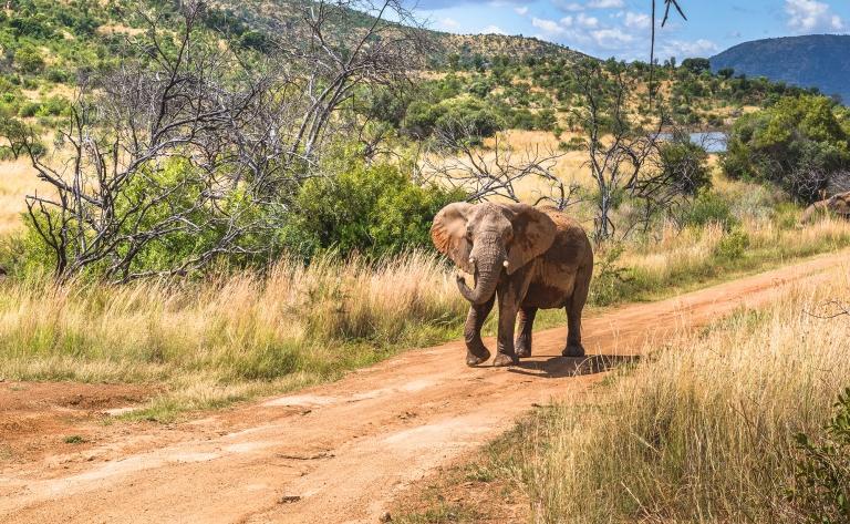 Parc National du Pilanesberg, le paradis des BIG 5