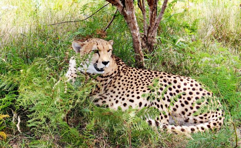 Safari et paysages du Swaziland
