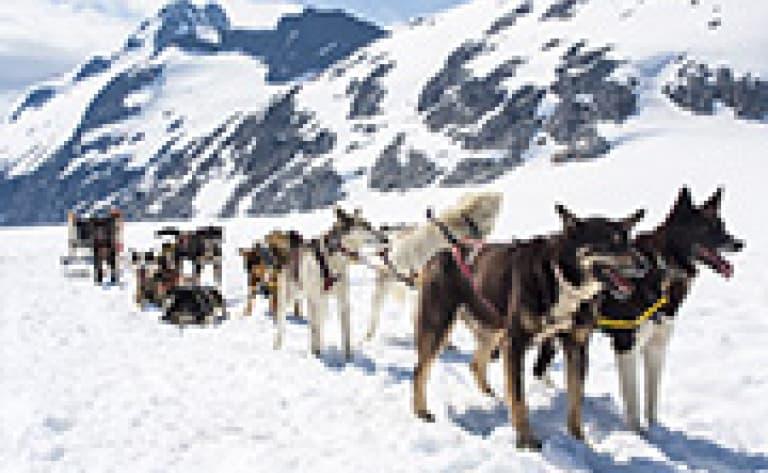Mini expédition en traîneau à chiens