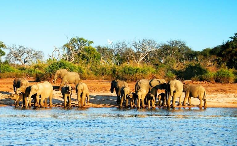 Croisière sur la rivière Chobe
