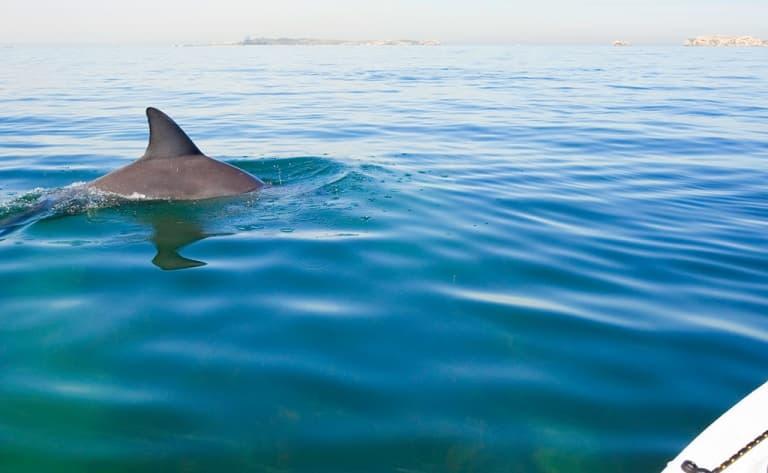 Sortie kayak avec les dauphins