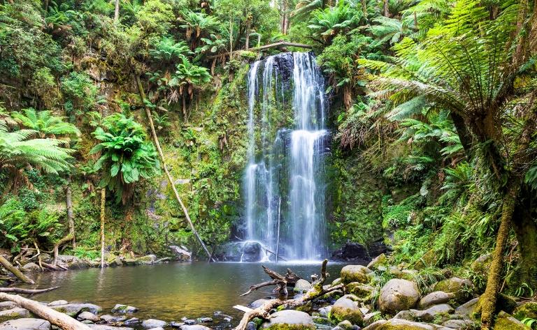 Une journée dans la Rainforest