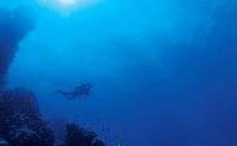 Plongée avec les raies mantas ou les requins baleines