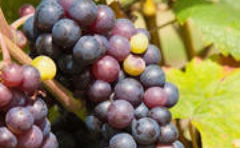 Route des vins prestige au cœur de Margaret River