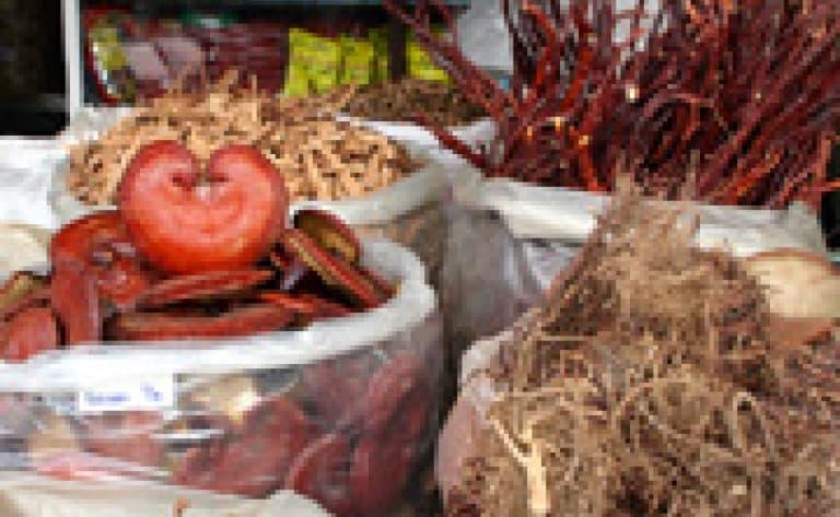 Recherche de plantes médicinales à Yen Bai