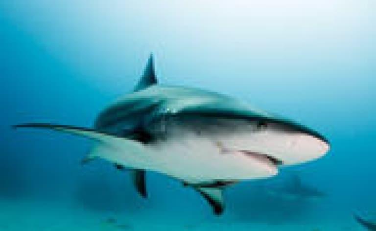 Le Shark labo