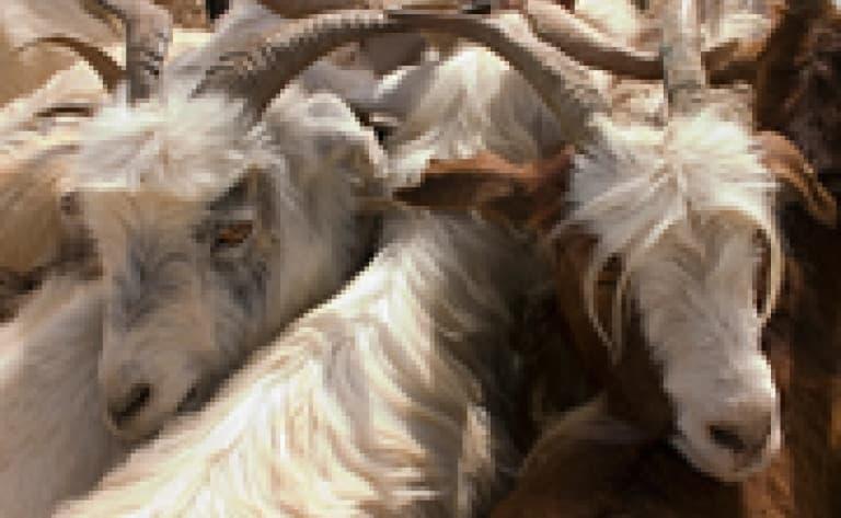 Le marché aux bestiaux et la foire du dimanche (Kashgar)