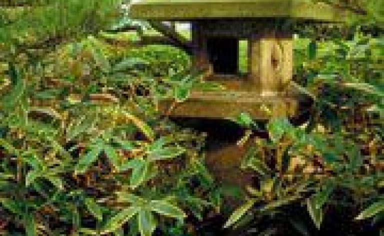 Visite des principaux sites culturels du Chugoku