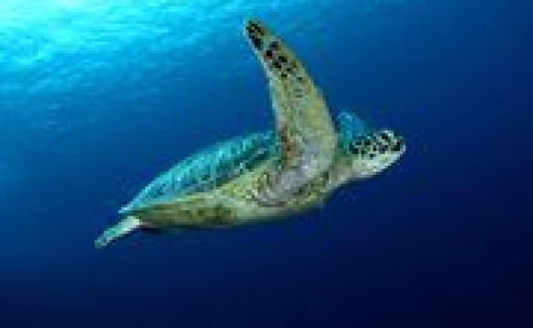 Plage aux tortues de Rantau Abdang