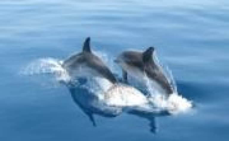 A la rencontre des dauphins - Archipel de Zanzibar