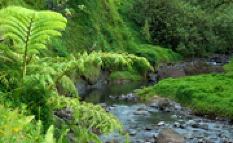 Randonnée pédèste guidée à la vallée de la Fautaua