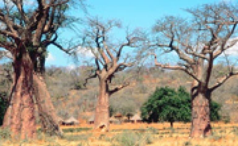 Excursion dans la réserve de Namib Rand