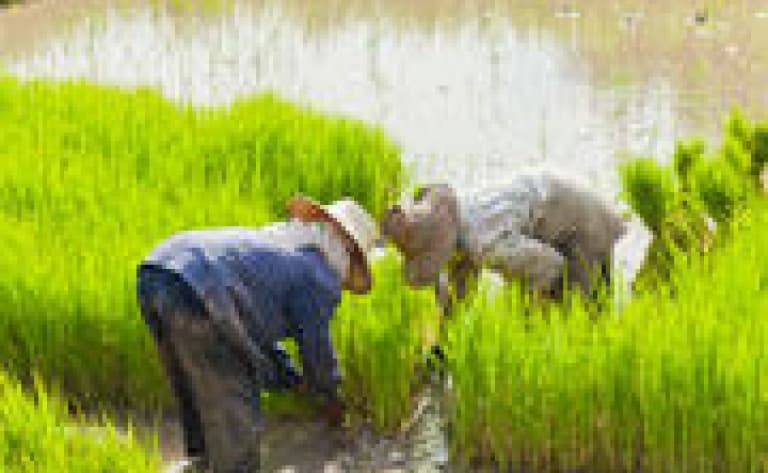 Randonnée au cœur des rizières jusqu'à Batad