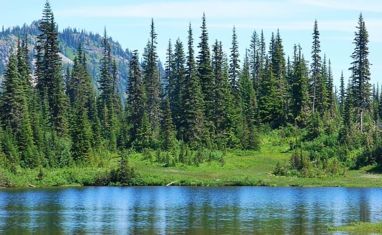 Parc National du Mont Rainier