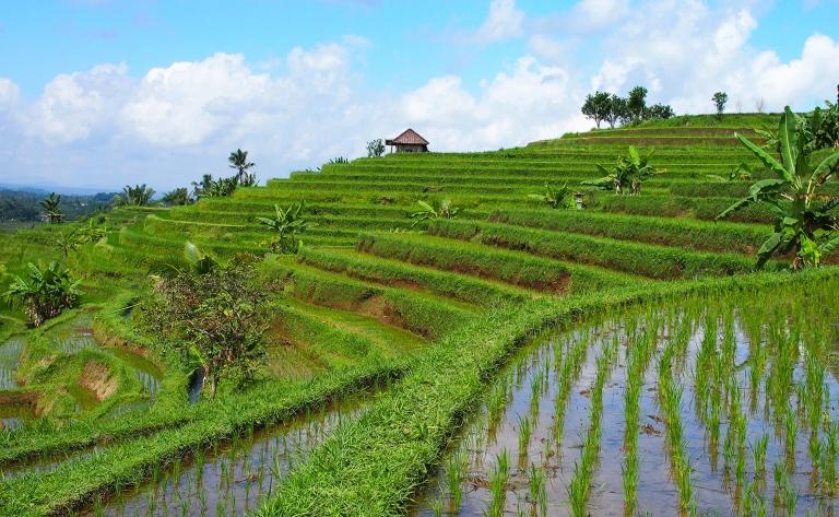 Au cœur d'un Bali préservé…