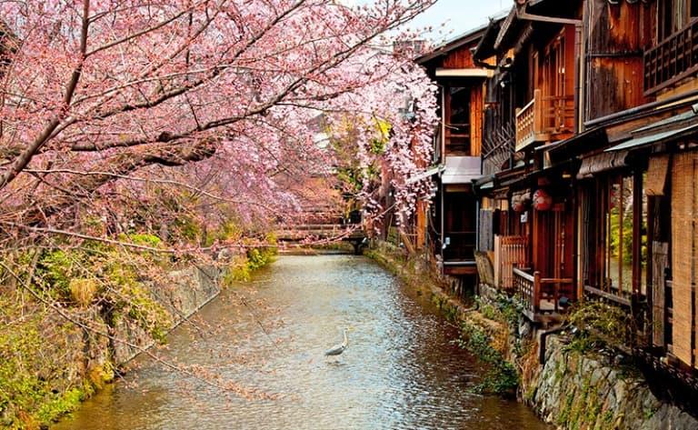 La fin d'une belle aventure au cœur du Japon traditionnel !