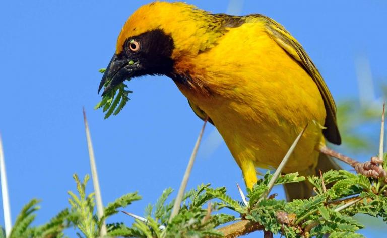 Safari ornithologique à pied et rencontre avec le peuple kenyan