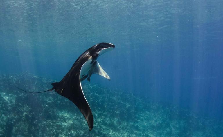 Plongée dans la Mer de Cortés
