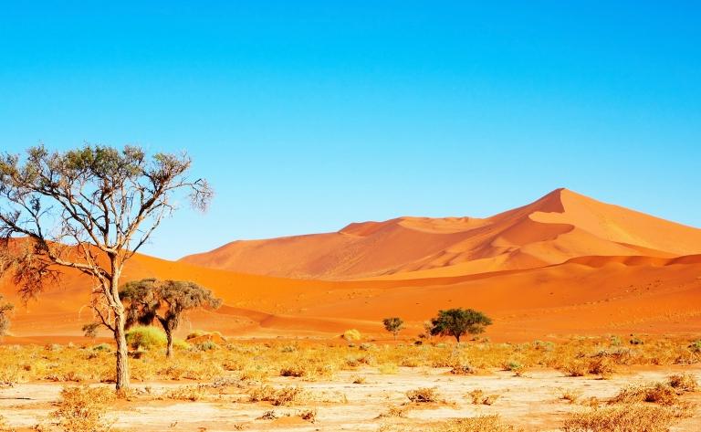 Merveilleux Désert du Kalahari