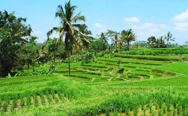 Du bleu azur de l'océan au vert tendre des rizières…