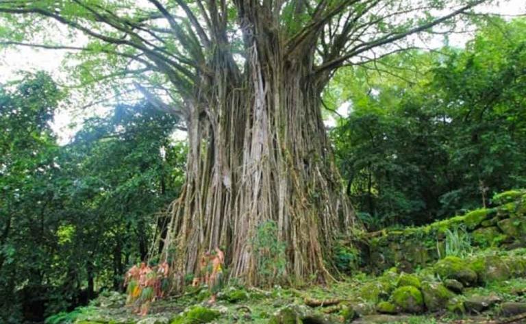 Vallée de Hatiheu - Journée complète, déjeuner inclus