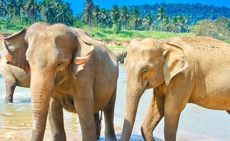 Safari au parc de Wilpattu