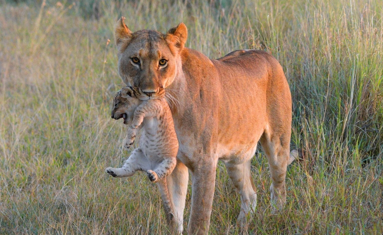 Safari au Parc Manyara