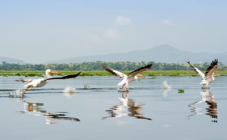 Bateau et safari à pied le long des rives fleuries du Lac Naivasha