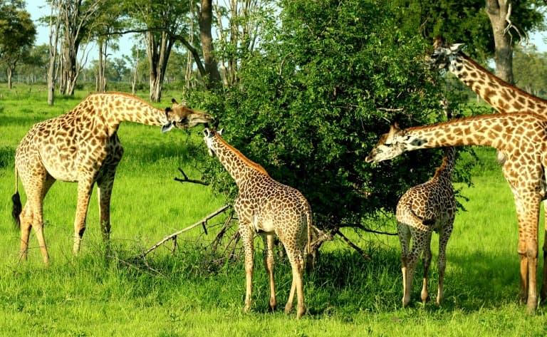 Exploration de la faune