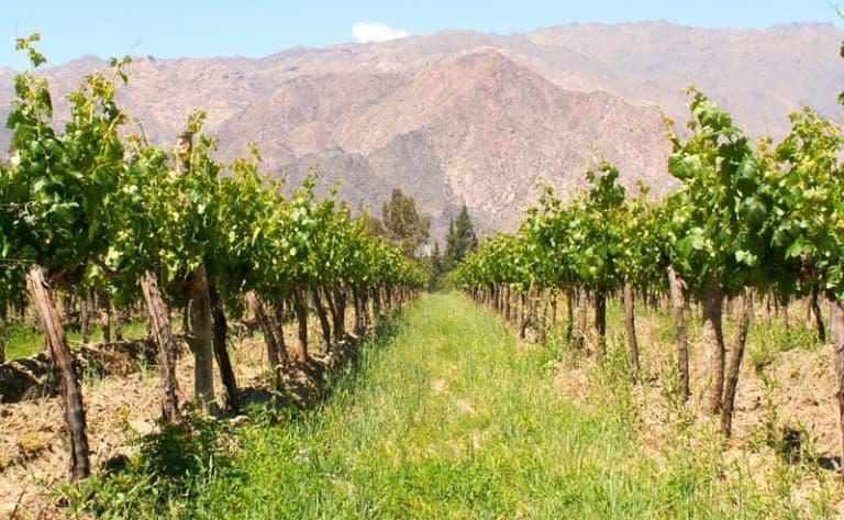 Découverte de la région de Cafayate et ses vignobles