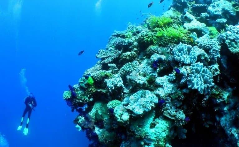 Croisière sur la Grande Barrière de Corai