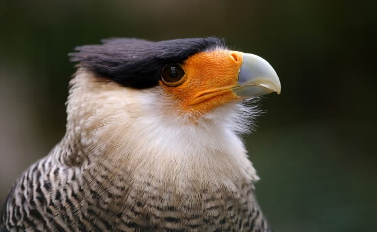 Observation des oiseaux à El Copal