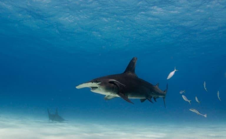 Tout sur le requin !