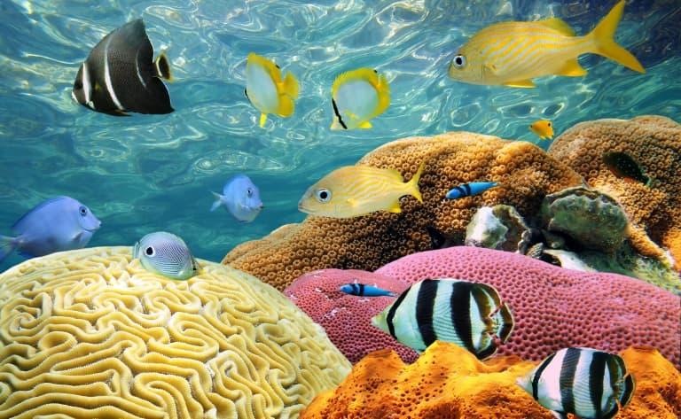 Exploration aquatique