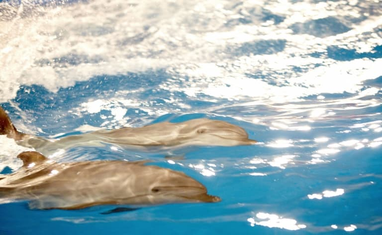 Dauphins ou requins ?