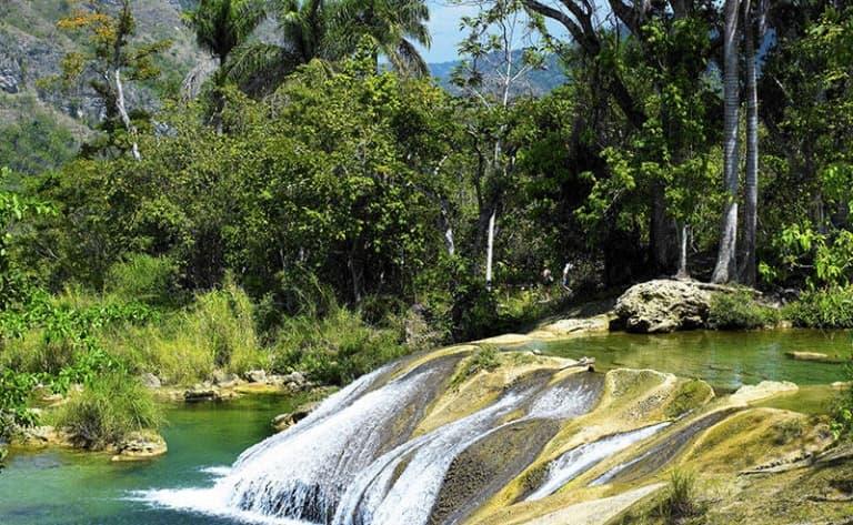 Une forêt tropicale magnifique