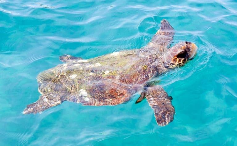 Excursion sur les îles Gili, plages et snorkeling sont au rendez-vous