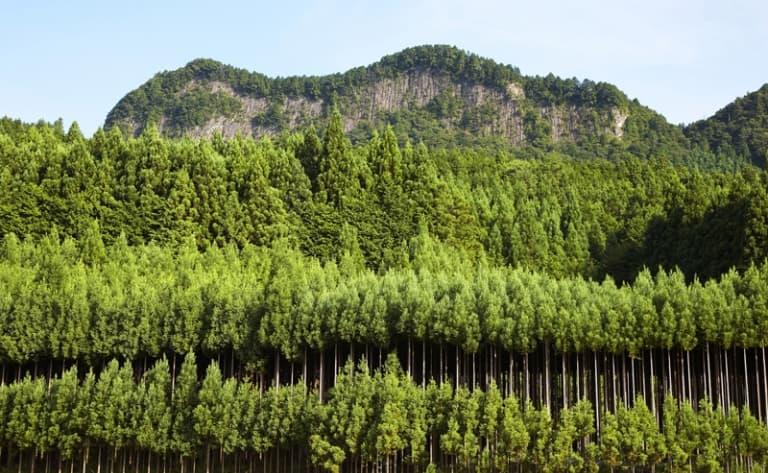 Discover UNESCO World Heritage Sites near Mount Uji