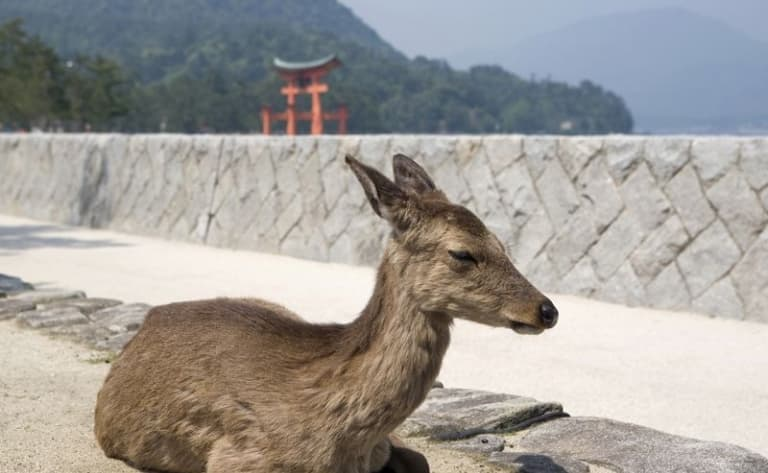 Nara Park and  Gango-ji temple